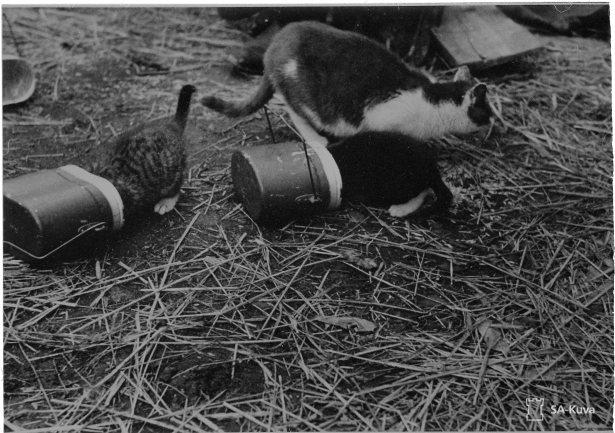 Kissat ruuan haussa.